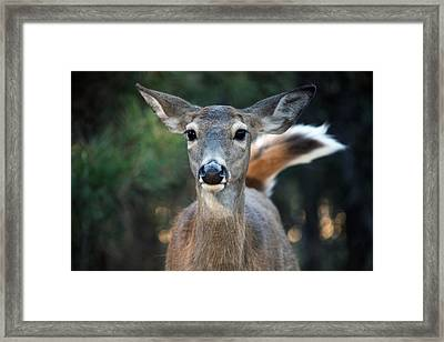 Framed Print featuring the photograph Swish Of The Tail  by Rita Kay Adams