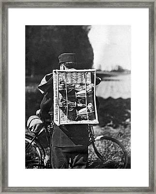 Swiss Army Pigeons Framed Print