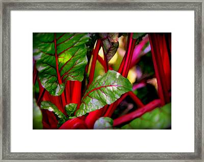 Swiss Chard Forest Framed Print
