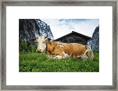 Swiss Miss Framed Print by Ryan Wyckoff