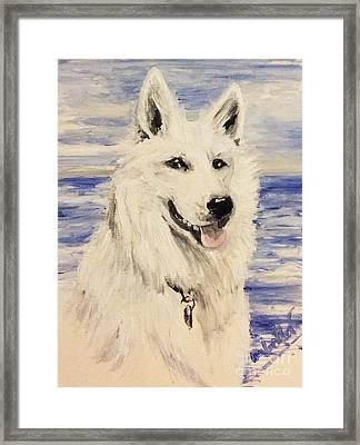 Swiss Shepherd Framed Print