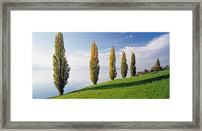 Switzerland, Lake Zug, Row Of Populus Framed Print