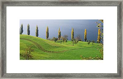 Switzerland, Lake Zug, View Of A Row Framed Print