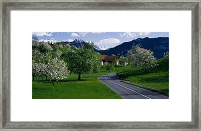 Switzerland, Luzern, Trees, Road Framed Print by Panoramic Images