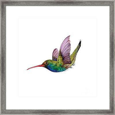 Swooping Broad Billed Hummingbird Framed Print by Amy Kirkpatrick