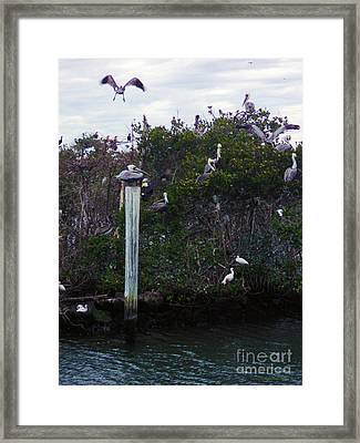 Framed Print featuring the photograph Swooping In by Megan Dirsa-DuBois