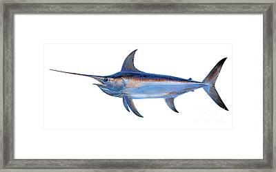 Swordfish Framed Print by Carey Chen