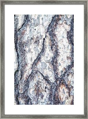 Sycamore Bark Abstract Framed Print