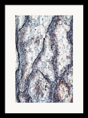 American Sycamore Framed Prints