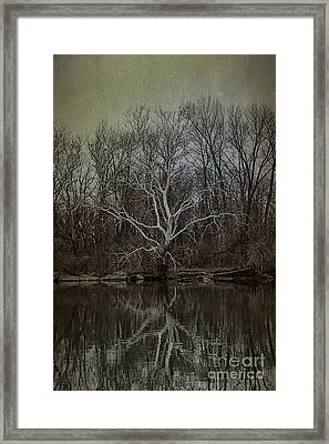 Sycamore Dancer Framed Print