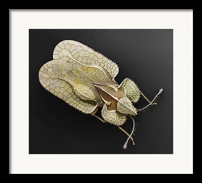 Electron Microscopy Photographs Framed Prints