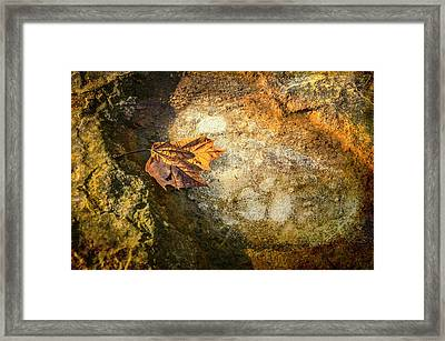 Sycamore Leaf In Ice Framed Print by Diana Boyd