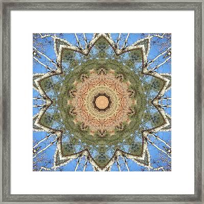 Sycamore Splendor Framed Print