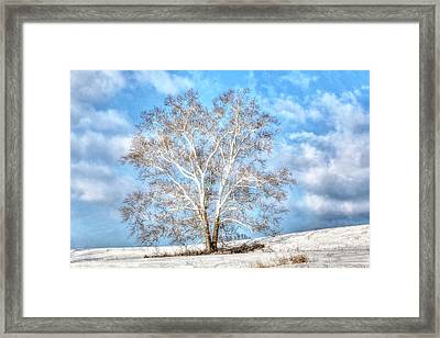 Sycamore Winter Framed Print