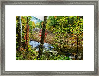 Sycamores And Williams River  Framed Print by Thomas R Fletcher