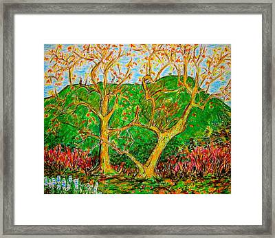 Sycamores Cahuenga Peak Framed Print