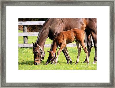 Sychronized Mare And Foal Framed Print