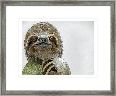 Sydney The Three-toed Sloth Framed Print by John Gaffen
