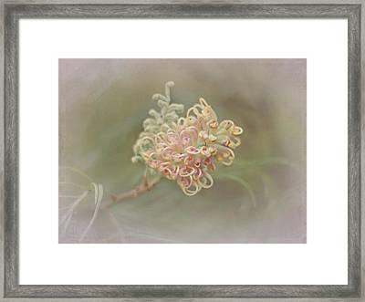 Framed Print featuring the photograph Sylvia by Elaine Teague