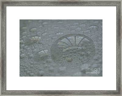 Symbiotic Framed Print by Luke Moore