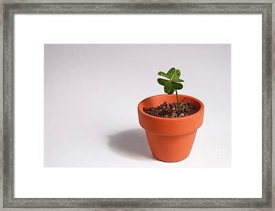 Symbol Of Good Luck Framed Print