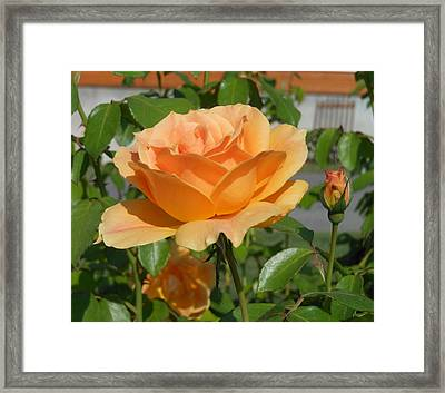 Symbol Of Love Framed Print by Kay Gilley