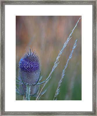 Symbol Of Scotland Framed Print