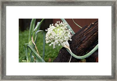 Symbol Of Wales Framed Print by Sherry Gombert