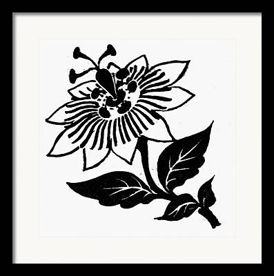 Passionflower Drawings Framed Prints