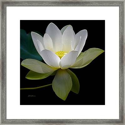 Symbolic White Lotus Framed Print
