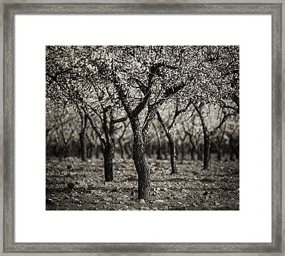 Framed Print featuring the photograph Symmetry by Antonio Jorge Nunes