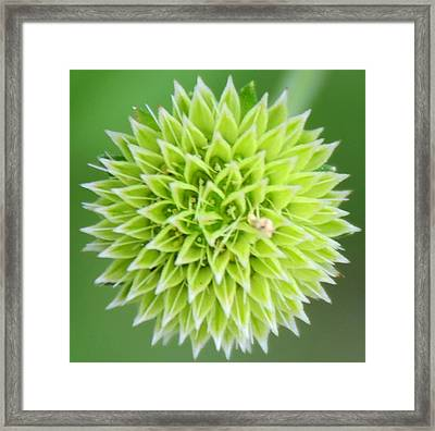 Symmetry In Green Framed Print by Julie Cameron