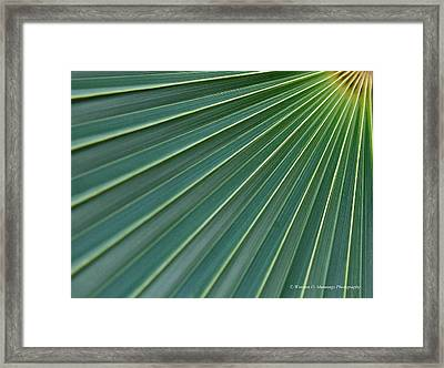 Symmetry In Motion 1 Framed Print by Winston D Munnings