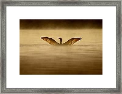 Symmetry Framed Print by Rob Blair