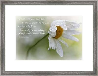 Sympathy Card Framed Print by Lisa Knechtel