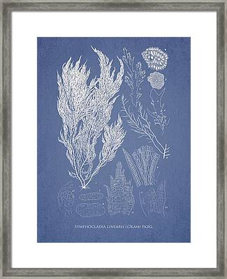 Symphocladia Linearis Framed Print by Aged Pixel