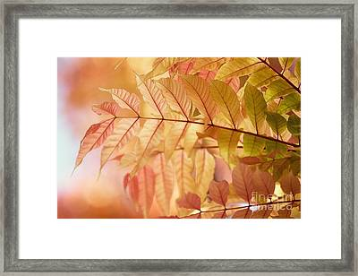Symphony Framed Print by Andrew Brooks