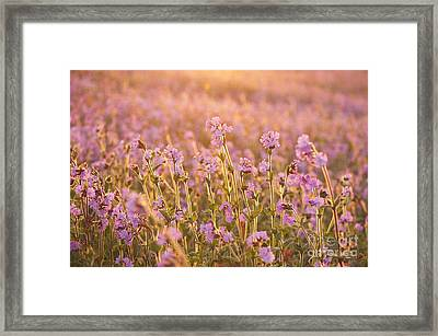 Symphony In Pink Framed Print by Anne Gilbert