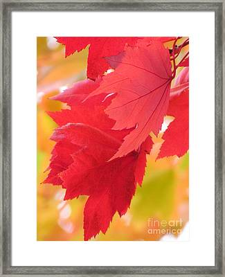 Framed Print featuring the photograph Symphony Of Autumn 22 by France Laliberte
