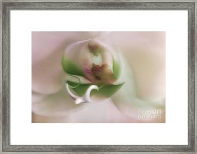 Symphony Of Elegance Framed Print