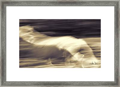 Framed Print featuring the photograph Synchronicity by Joan Davis