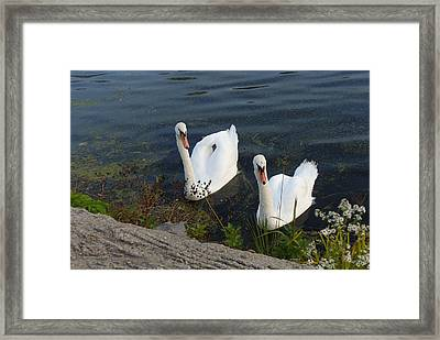 Framed Print featuring the photograph Synchronicity by Lingfai Leung