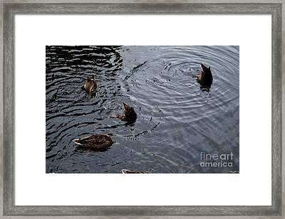 Synchronised Swimming Team Framed Print by Scott Lyons
