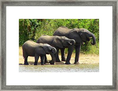 Synchronized Drinking Framed Print