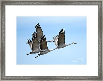 Synchronized Framed Print