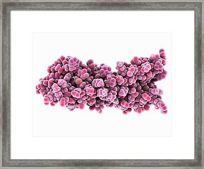 Syntaxin 1a Molecule Framed Print by Laguna Design/science Photo Library