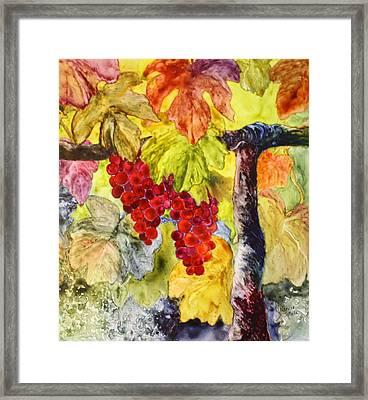 Syrah Framed Print by Nancy Jolley