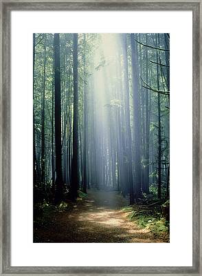 T. Bonderud Path Through Trees In Mist Framed Print by First Light