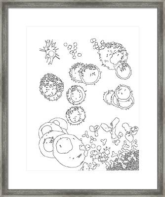 T Cell Dependent B Cell Activation Framed Print by Russell Kightley
