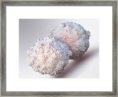T-lymphocytes Framed Print by Maurizio De Angelis